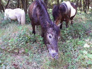 Prévention du risque incendie : pastoralisme dans la Sine