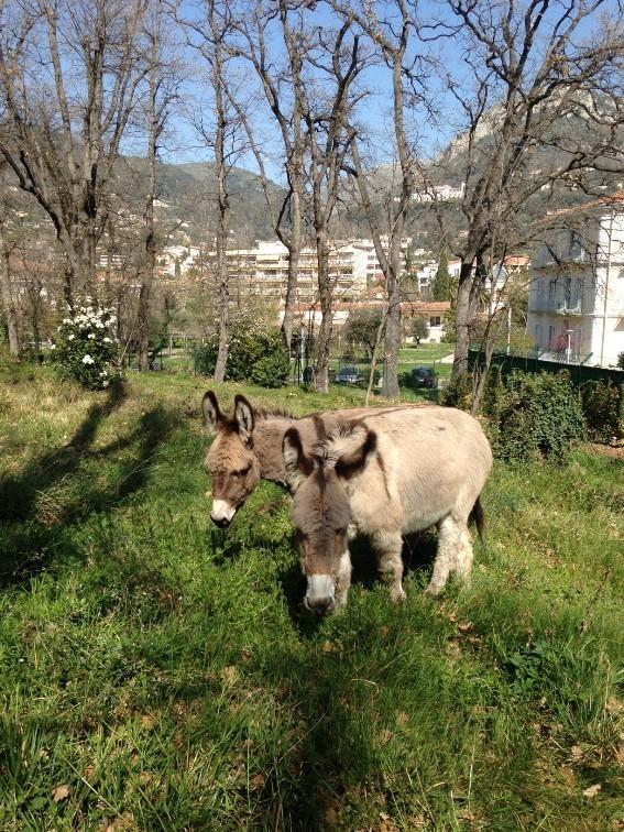 Violette et Dorgane débroussaillent le Parc de la Conque