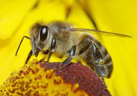 Apiculteurs : déclarez vos ruches