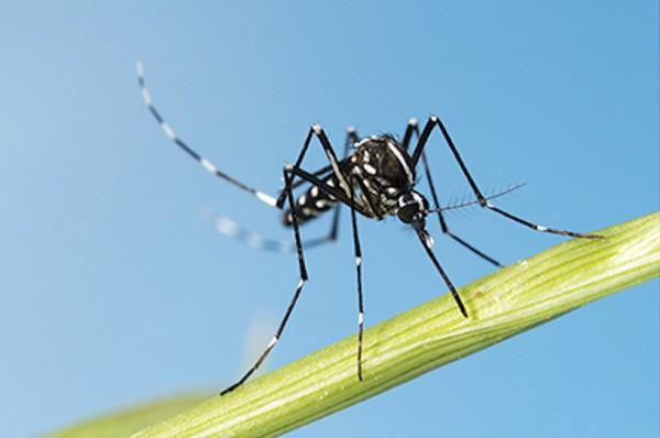 Plan de lutte contre la prolifération du moustique tigre