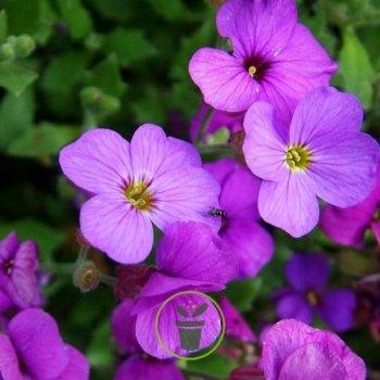 Jardinez et participez à l'opération Mon jardin en Ville