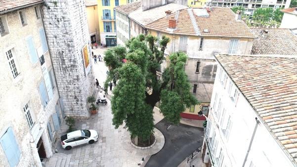 Le Grand Frêne préservé