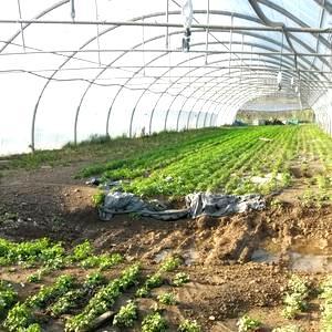 Reconnaissance de calamité agricole