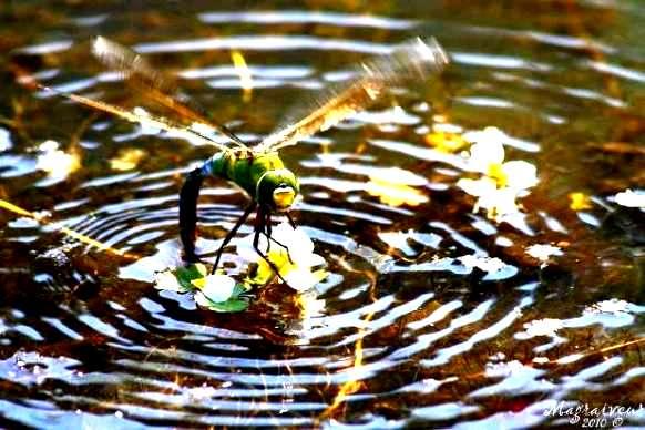 Journée de l'eau ''Notre capital le plus précieux'' REPORTÉE